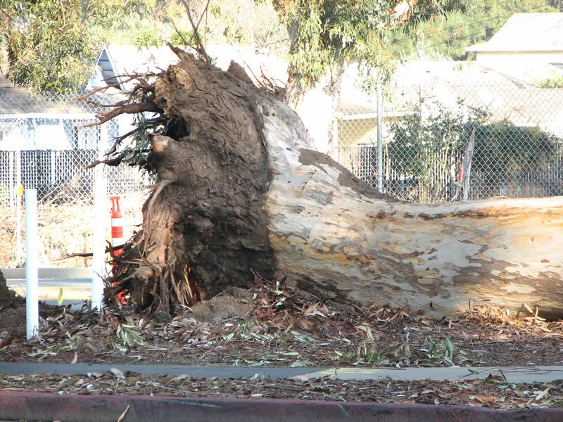 Stewarts Tree Service