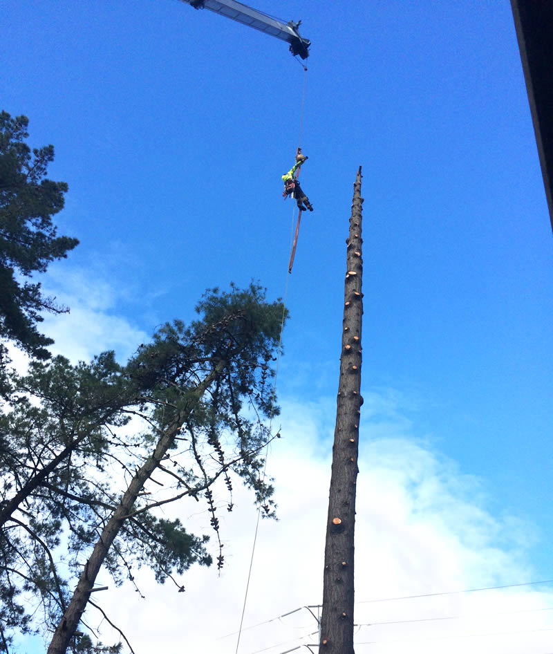 Stewart's Tree Service